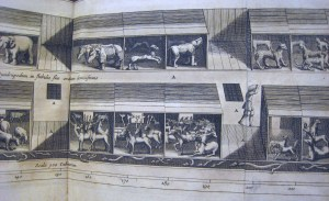 Pictured here is an illustration from Kircher's Arca Noë, published in 1675 in Amsterdam. In this book, Kircher analyzes the dimensions of the Ark and also discusses the logistics of the Ark voyage, speculating on whether extra livestock was brought to feed carnivores and what the daily schedule of feeding and caring for animals must have been.