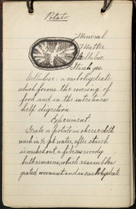 Notes on the potato's nutritional make-up. At the bottom of the page, Winslow included notes on a simple experiment to distill the carbohydrates from a potato.