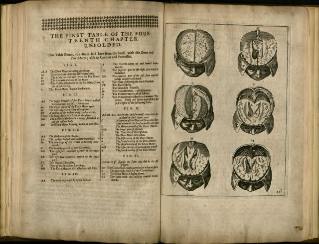 Diagram of the Brain and Skull, from Nicholas Culpeper's translation of Johann Vesling's Anatomy of the Body of Man.