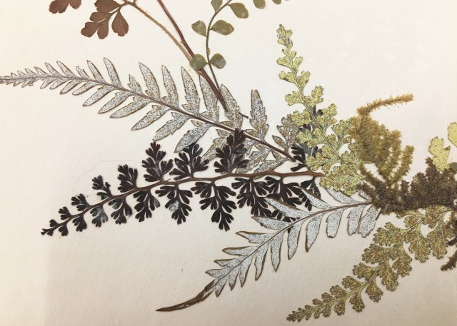 Close up of pressed plant matter, mainly fern-like plants. They are black, green, and silver.